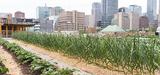 Encourager l'agriculture urbaine pourrait améliorer la résilience des villes