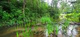 Biodiversité : et si on laissait des espaces naturels évoluer librement…