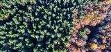 Sécheresses répétées : des dommages irréversibles sur les forêts ?