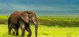 L'éléphant et la girafe sortent renforcés de la conférence sur le commerce des espèces menacées