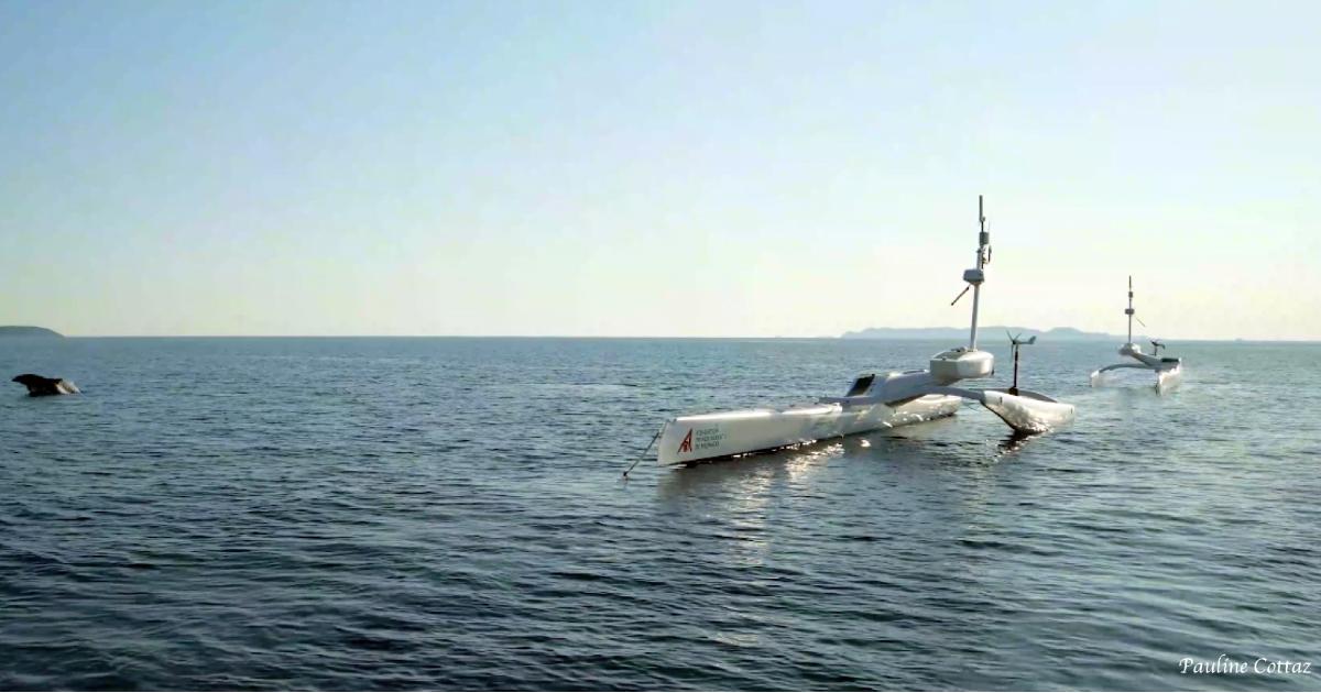 Un confinement bénéfique pour les cétacés de Méditerranée