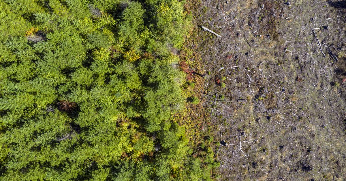 Covid-19 et biodiversité: une synthèse des connaissances scientifiques en vue d'agir