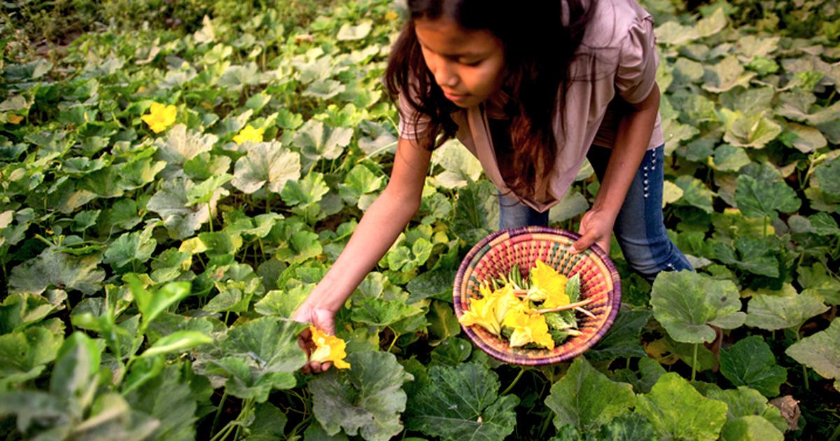 L'effondrement de la biodiversité menace la sécurité alimentaire mondiale