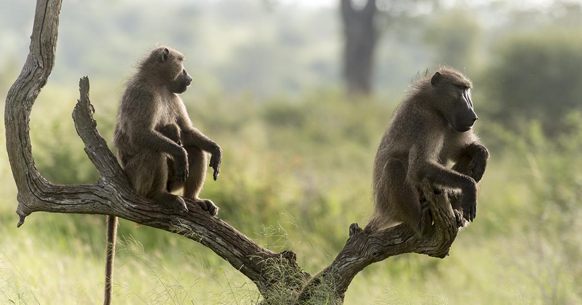Biodiversité: aucun des vingt objectifs d'Aichi n'est atteint