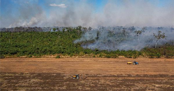 Déforestation en Amazonie: des pistes pour mettre fin aux importations françaises de soja