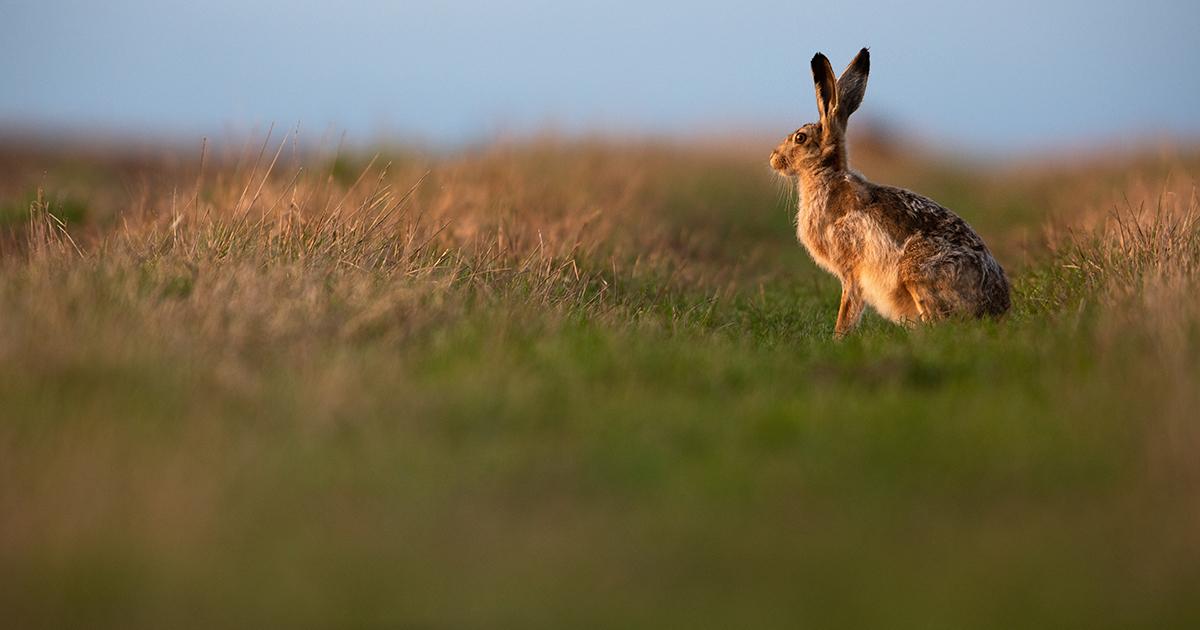 Biodiversité: un bilan pathétique pour la mise en œuvre de la loi de reconquête