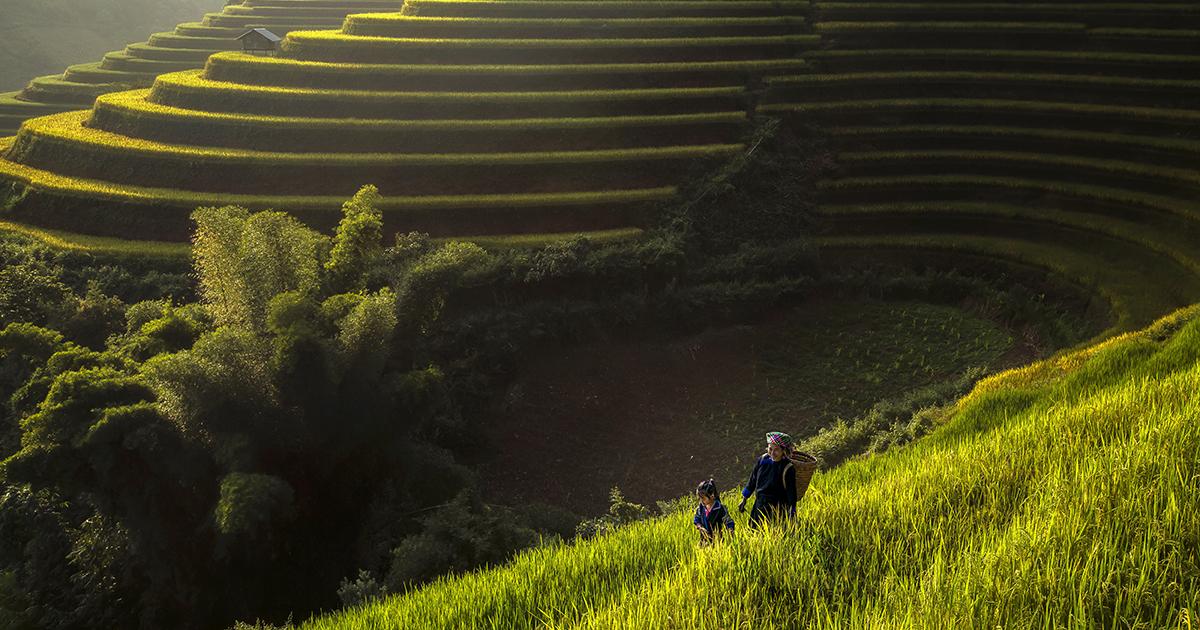 Biodiversité: un sommet de l'ONU comme premier pas vers un accord en 2021