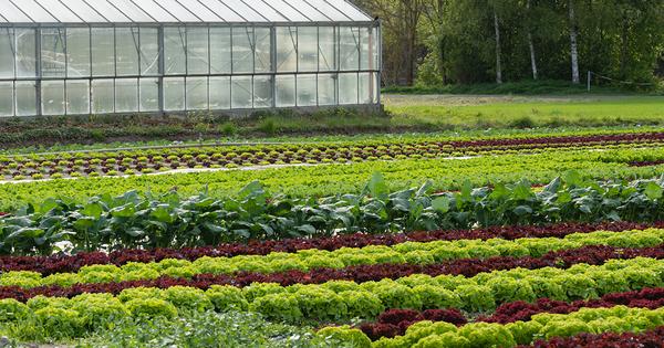 Politique agricole commune: le collectif «Pour une autre PAC» attend plus d'ambition des eurodéputés