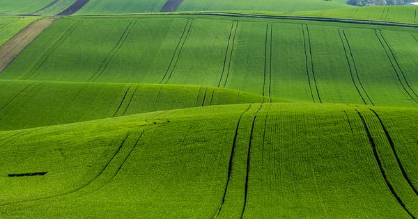 La biodiversité européenne s'effondre sous les coups de boutoir de l'agriculture intensive