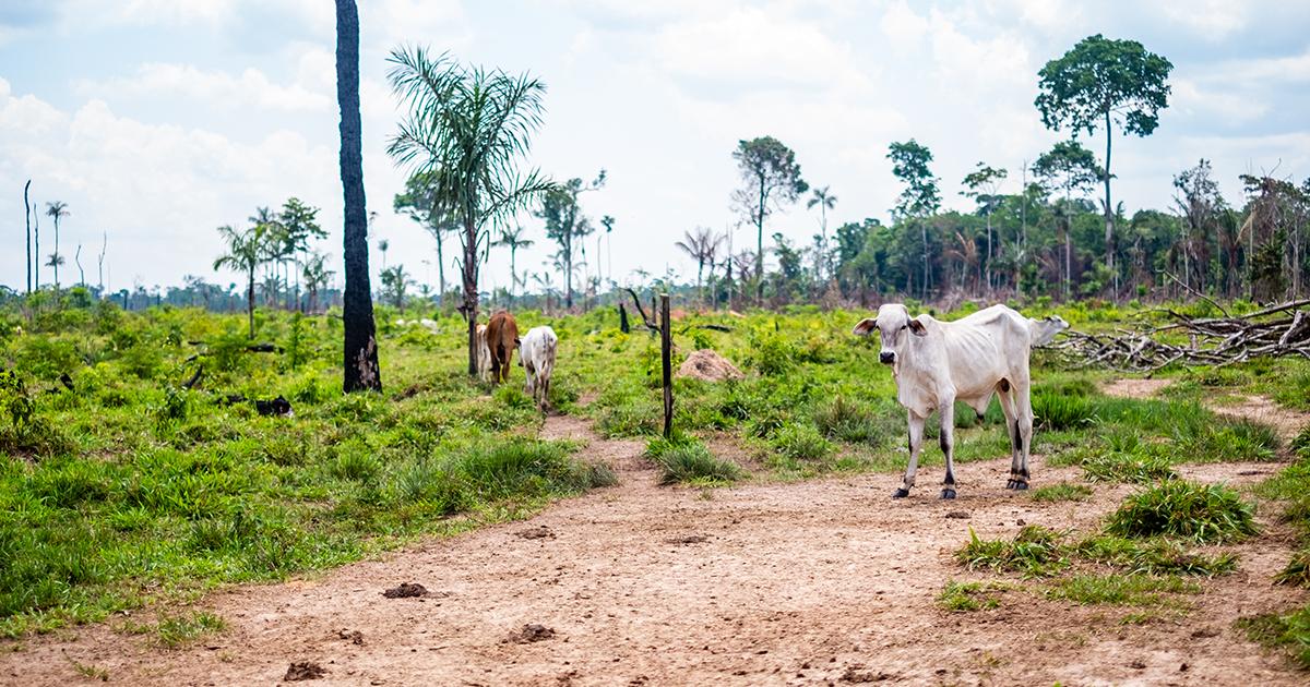 Érosion de la biodiversité et pandémies: le pire est à venir