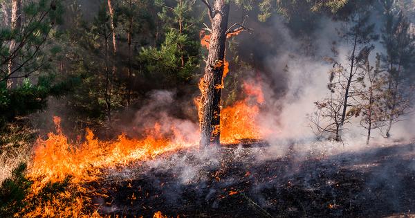 Les sites Natura 2000 particulièrement touchés par les feux de forêts en Europe