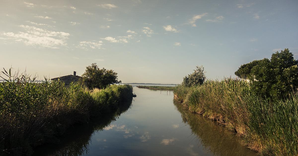 Un nouvel indicateur pour évaluer l'effet cocktail des pesticides dans les lagunes