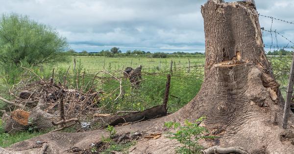 Lutte contre la déforestation importée: le Gouvernement mise sur les bonnes pratiques