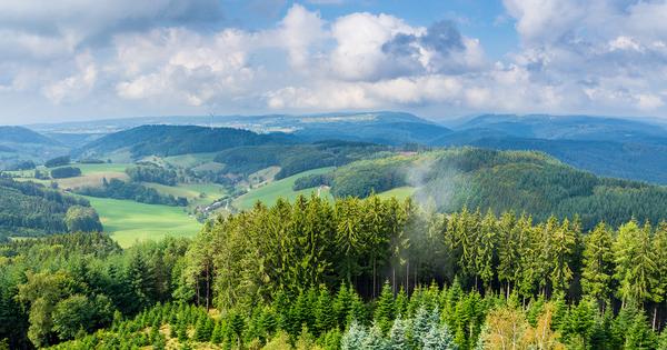 Une feuille de route controversée pour adapter la forêt au changement climatique
