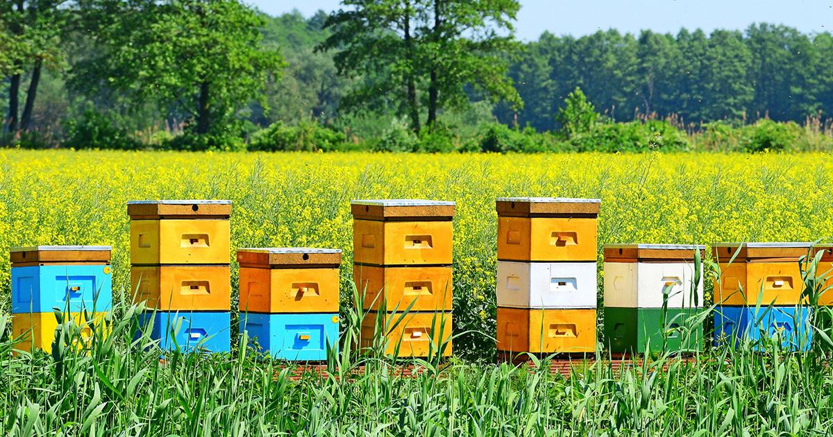 Un plan en faveur des pollinisateurs pour faire oublier les néonicotinoïdes