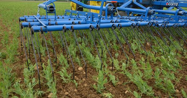 Réduction des phytosanitaires: comment valoriser les bons résultats des fermes Dephy