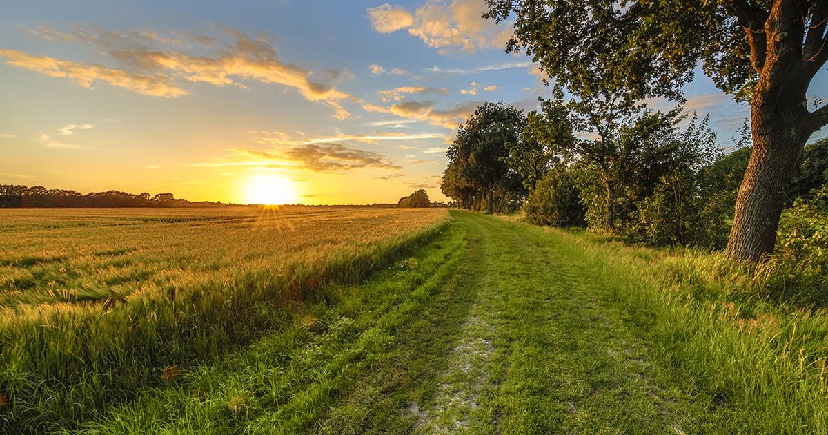 Projet de loi climat: cet amendement qui menace les chemins ruraux