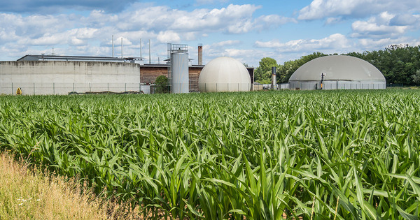Bioénergies: un projet de décret sur les critères de durabilité est mis en consultation