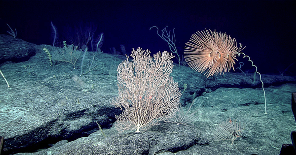 Des ONG demandent à l'UE de montrer l'exemple en interdisant l'exploitation minière des grands fonds marins