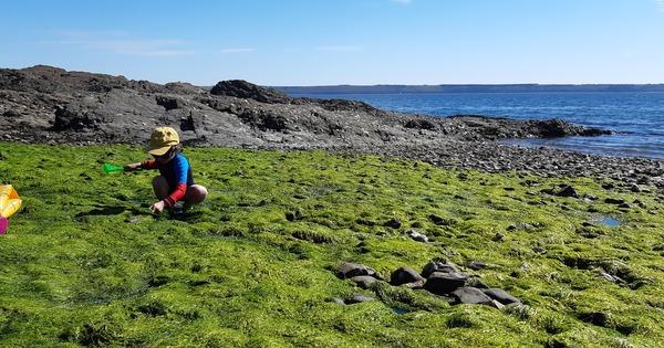 Algues vertes en Bretagne: un alignement des planètes pour sortir de l'échec?