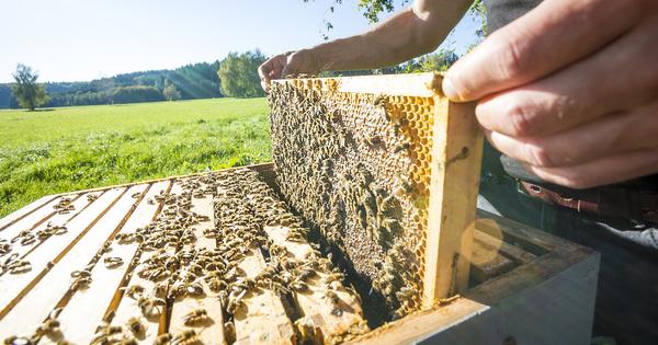 Lancement de la consultation sur le prochain arrêté «abeilles»