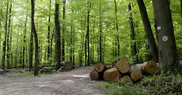 Forêts: ces nouveaux outils sculptés par les professionnels pour s'adapter au changement climatique