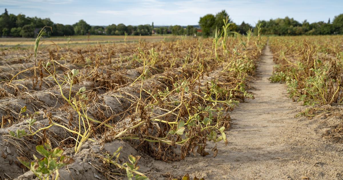 Varenne agricole de l'eau: un démarrage de la thématique «vision partagée» en septembre