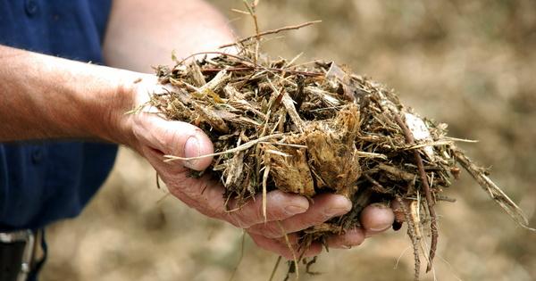 Le potentiel énergétique de la biomasse agricole n'est pas encore suffisant pour 2050