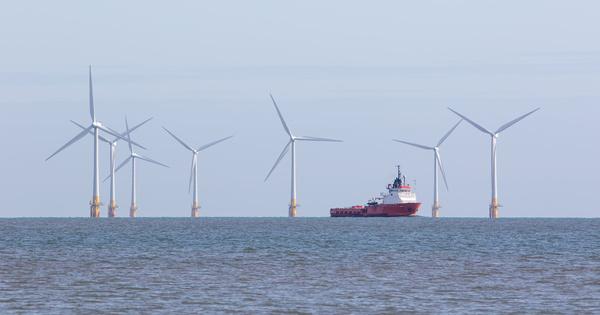 Saint-Brieuc: Sea Shepherd dénonce l'impact potentiel du parc éolien sur la biodiversité