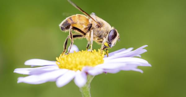 Effondrement de la biodiversité: deux associations somment l'État français d'agir