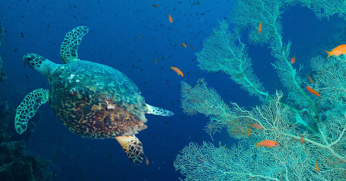 Le congrès mondial de la nature s'achève sur un bilan en demi-teinte