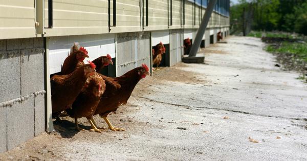 Trois labels alimentaires sont peu utiles à l'environnement, selon Greenpeace et WWF