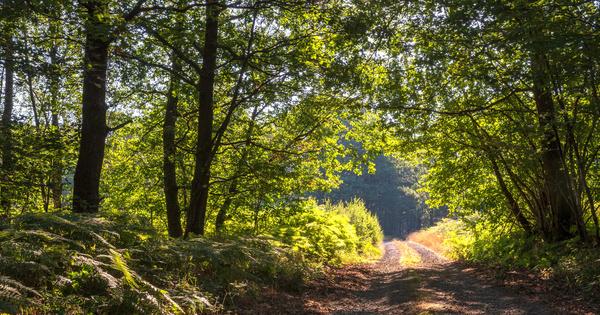 La surtaxation des forêts françaises joue contre l'environnement