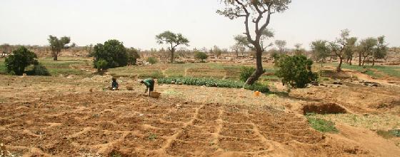 7 points pour comprendre la crise agricole en Afrique subsaharienne
