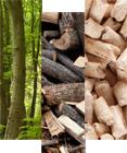 Bois et biomasse : optez pour des énergies compétitives avec Compte.R