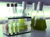 Production d'énergie à partir de micro-algues marine : le défi de l'industrialisation