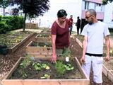 Les jardins partag�s gagnent du terrain