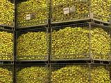 L'attrait environnemental du recyclage des balles de tennis en question