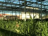 Serres photovoltaïques : un bon moyen pour les agriculteurs de maintenir leur activité