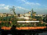 Agriculture sur les toits : une solution innovante pour cultiver en pleine ville