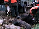 La chasse comme outil de régulation des populations de grand gibier de forêt