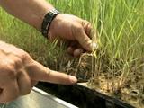 Zones humides artificielles : une solution contre les micropolluants?