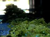 Lancement d'une filière de valorisation des algues vertes bretonnes : bonne opportunité ou vrai scandale ?