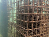 Le génie écologique au secours de la perte de biodiversité marine