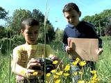 Mobiliser les élèves au chevet de la biodiversité