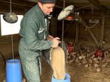 Etre agriculteur en Ile-de-France, c'est encore possible !