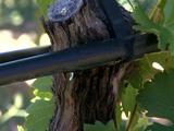 Des stations d'épuration pour irriguer les vignes