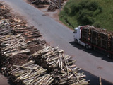 Centrale biomasse : la forêt française en danger ?