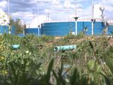 Traitement de l'eau : les zones de rejets végétalisées sont-elles vraiment efficaces ?