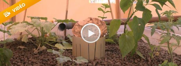 L'aquaponie facilite l'implantation de fermes urbaines